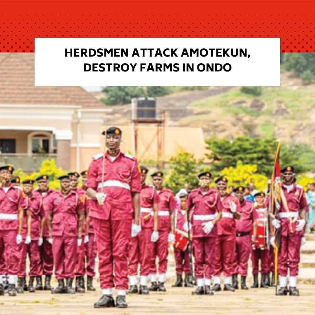 """The Ondo State Security Network Agency,  Amotekun, on Wednesday said some herdsmen attacked its operatives on a farm at Osi Community, in Akure North Local Government Area of the state,  while the operatives were trying to settle a rift between them and the farmers in the community. . The operatives of the agency were said to have moved to the community, following a distress call from the farmers that cows had destroyed their farms in the area. . The state Commander of Amotekun,  Chief Adetunji Adeleye, who disclosed this to journalists in Akure, the state capital,  however, said one of the herdsmen was arrested with dangerous weapons while 16 cows were seized by the operatives. . He stated, """"Some farmers from Osi  Community ran to the office complaining that their farms had been destroyed by herds.  We sent our men there to assess the situation. They found out that the herds were actually on the farm and we invited the herdsmen. But unfortunately, on getting there, they attacked our men with knives and other dangerous weapons. But we were able to arrest one of them,  named Abdulkadir Mohammed."""" . Adeleye also disclosed that two suspected cattle rustlers were arrested by his men while a NISSAN Serena marked LAGOS FJ 423 KRD, brought by the suspected rustlers to steal cows belonging to one Alhaji Ilyasu  was impounded . He said, """"One Alhaji Ilyasu,  a Fulani man came to us that some people came with a Serena Bus to steal their cattle. They came to us and we sent our men out. We were able to recover the vehicle they wanted to  used in stealing the cows, we also recovered the cows. . """"We were able to trace some of the rustlers that ran away to somewhere in Ogun State. We have apprehended one Sudauna Gombe and one Ogunyale Sola, who was the driver of the abandoned Serena. We have handed them over to the Agro Department of the  Nigeria Security and Civil Defence Corps for detailed investigation."""