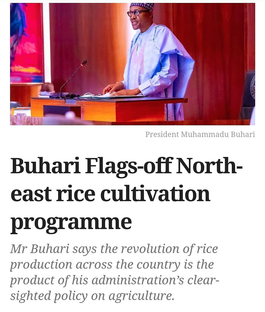 """President Muhammadu Buharihas described the revolution in rice production across the country as a product of his administration's policy and the diligent execution of it by institutions of state such as the Central Bank of Nigeria.  The president spoke at the commemoration of the national rice festival and the flag-off of the North-east 2021 and 2nd cycle 2021 dry season rice cultivation programme and 2020 wet season harvest aggregation and sales of paddy rice to millers held in Gombe State.  Represented by the Kebbi State Governor, Atiku Bagudu, Mr Buhari expressed gratitude to the CBN for solving the problems of financing in agriculture and state governors for championing the causeof rice production and other agricultural commodities. He commended the Governor Inuwa Yahaya of Gombe State for reviving the cotton value chain for which the state was once known for.  The president said despite limited resources, his administration had achieved monumental results in the agricultural production and its value chain, saying a lot of infrastructural projects that will galvanize economic activities were being undertaken across the country for the benefit of all Nigerians. In his remark, Mr Yahaya said but for the policy direction of the president and the sound support of the CBN, the heaps of rice pyramids on display would not have been possible. """"The pyramids are back and we are happy to see this and let me recall that only in January the Management of Central Bank with the National Cotton Association were here in Gombe and they kick-started the aggregation process of cotton farmers who equally paid the facilities they took in kind to signal the return of cotton production.""""  He said the state was a shining example in the anchor borrower programme of the Central Bank of Nigeria, owing to the fact that farmers in the state were poised on taking advantage of the programme to boost agricultural production and eventually pay in kind facilities obtained to maintain sustainabili"""